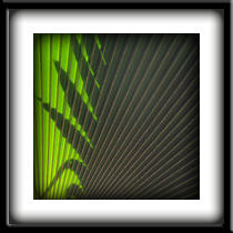 an image of a palm frond in front of a shadow image of a palm frond