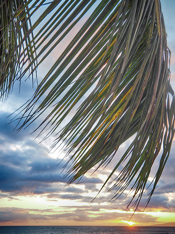 palm frond at sunset