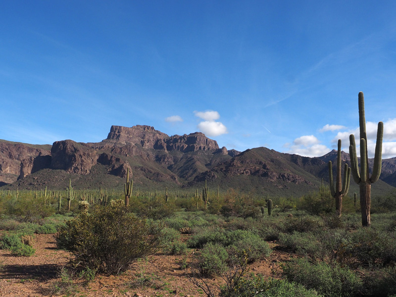 A scenic image of Saguaro cactus and the Superstition Mountains