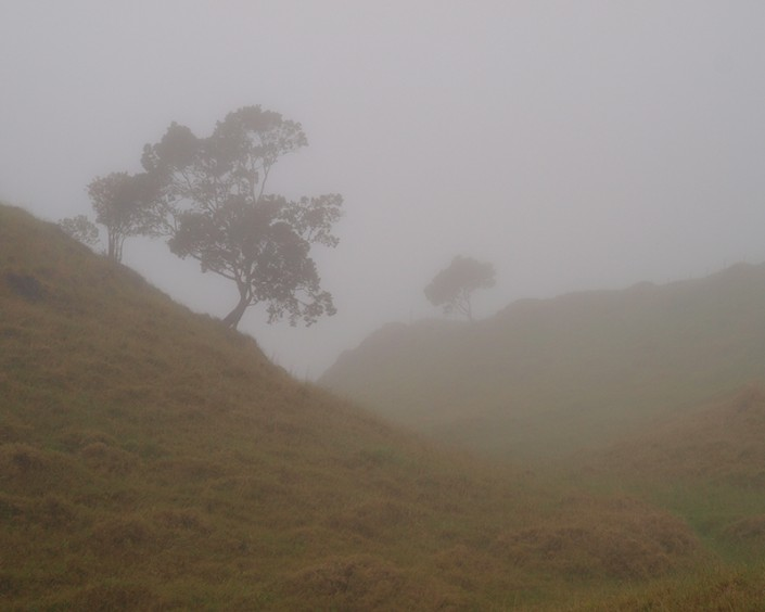 Trees growing on a mountain slope in Hawaii