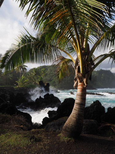 A lone palm tree along the shoreline of Kaenae Peninsual, Maui, Hawaii