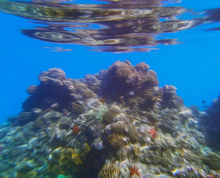 A underwater view of a colorful coral sea mount in the waters of Maui, Hawaii