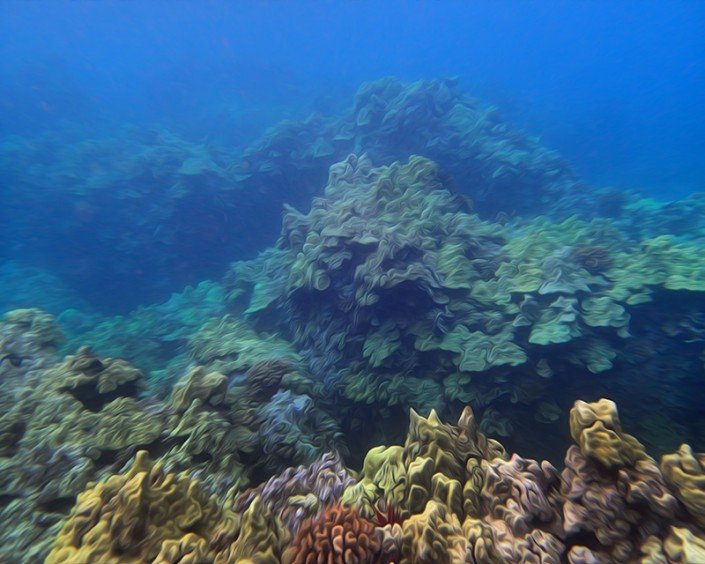 A view of Maui's colorful underwater coral gardens