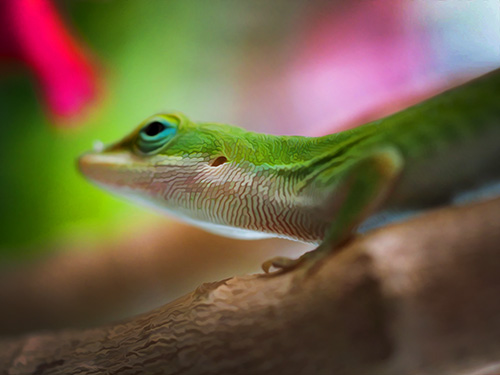 a close up image of a gecko as a headshot portrait